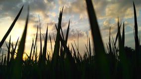sombra de la planta por la tarde Imagenes de archivo