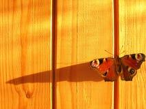 Sombra de las alas Imágenes de archivo libres de regalías