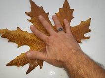 Sombra de minha mão Foto de Stock Royalty Free