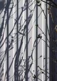 Sombra de ramos novos Imagem de Stock