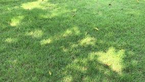 Sombra de Sun de un árbol en la hierba Tailandia verde metrajes