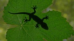A sombra de um lagarto do geco que rasteja no verde sae da ilustração 3d Fotografia de Stock