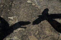 A sombra de um pássaro feito de duas mãos Imagens de Stock Royalty Free