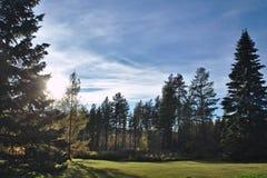Sombra de um sempre-verde Fotografia de Stock