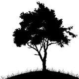 Sombra de uma árvore, ilustração royalty free