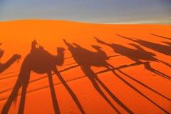 Sombra de uma caravana dos camelos com o turista no deserto em sóis Foto de Stock Royalty Free