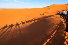 Sombra de uma caravana dos camelos com o turista no deserto em sóis Foto de Stock