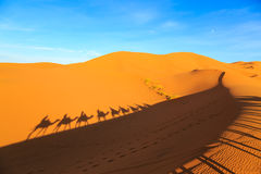Sombra de uma caravana dos camelos com o turista no deserto em sóis Imagens de Stock Royalty Free