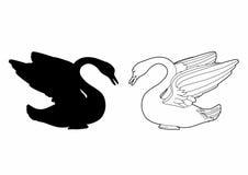 Sombra de uma cisne Imagens de Stock