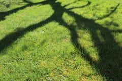 Sombra de un árbol en una hierba verde imagenes de archivo