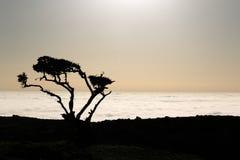 Sombra de un árbol y de nubes Fotos de archivo