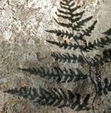 Sombra de un helecho en una roca Fotos de archivo libres de regalías