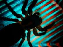 Sombra de una araña Fotos de archivo libres de regalías