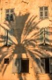Sombra de una palmera Fotografía de archivo libre de regalías