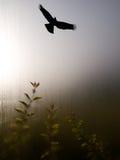 Sombra del águila Imagenes de archivo