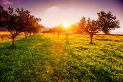 Sombra del árbol con puesta del sol Foto de archivo