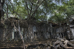 Sombra del árbol de Angkor Wat Beng Mealea Imágenes de archivo libres de regalías