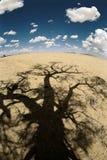 Sombra del árbol del desierto imagen de archivo