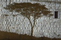 Sombra del árbol en blanco y negro