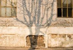 Sombra del árbol en la pared dameged del edificio Fotografía de archivo libre de regalías