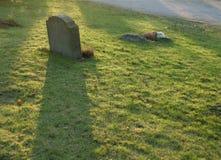 Sombra del dolor Imagen de archivo