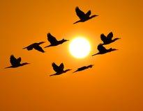 Sombra del pájaro del cormorán Foto de archivo