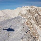 Sombra del puma Imagen de archivo