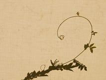 Sombra del tendril de la flor en la lona - fondo fotografía de archivo libre de regalías
