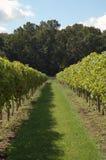 Sombra del viñedo Fotos de archivo