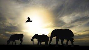 Sombra do animal Imagem de Stock