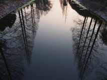 Sombra do cedro ou cedro própria Fotos de Stock Royalty Free