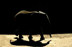 Sombra do elefante Fotografia de Stock