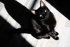 sombra do gato imagem de stock