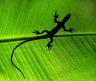 Sombra do lagarto fotografia de stock