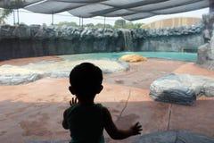 Sombra do menino que olha o urso polar no jardim zoológico Imagem de Stock Royalty Free