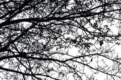 Sombra do ramo de árvore Foto de Stock Royalty Free