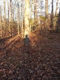 Sombra dos caçadores Fotografia de Stock