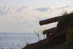 Sombra dos logs de madeira Foto de Stock