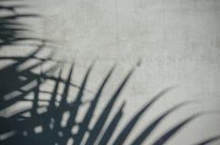 Sombra em folha de palmeira na parede Fotografia de Stock