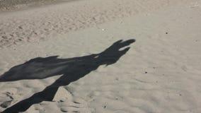 Sombra em uma areia da moça magro com pareo em um vento video estoque