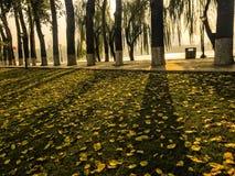 Sombra en caída Fotografía de archivo
