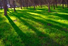 Sombra en el bosque imagen de archivo