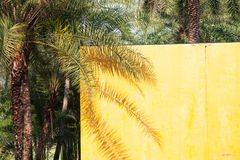 sombra en una pared amarilla - fondo de la palmera del verano imagen de archivo