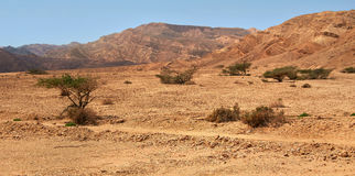 Sombra no deserto Foto de Stock Royalty Free
