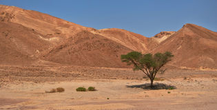Sombra no deserto Imagem de Stock Royalty Free