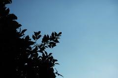 Sombra oscura del arbusto de las hojas de las ramas Fotografía de archivo libre de regalías