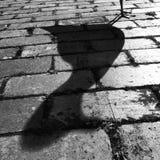 Sombra preta & branca da gaivota Fotografia de Stock