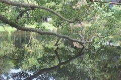 Sombra y cuerpo en el nivel del agua Fotos de archivo