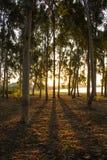 Sombras, árvores, sol, reflexões, alvorecer Imagens de Stock