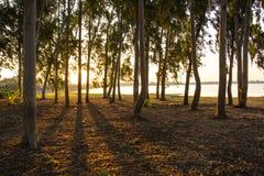 Sombras, árvores, sol, reflexões, alvorecer Imagens de Stock Royalty Free
